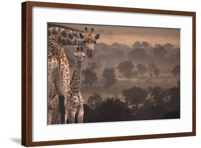 Giraffes in Africa-DLILLC-Framed Photographic Print