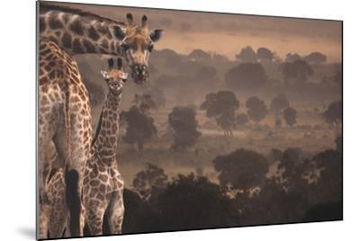 Giraffes in Africa-DLILLC-Mounted Photographic Print