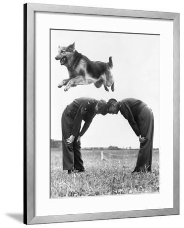 German Shepherd Jumping during Military Training--Framed Photographic Print