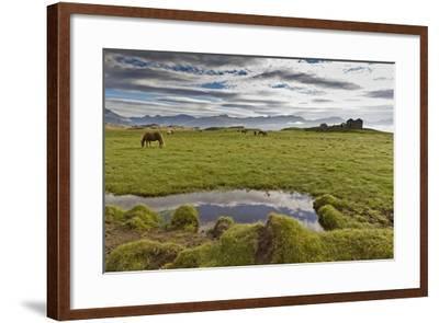 Horses Grazing by Abandon House, Vidbordssel Farm, Hornafjordur, Iceland-Arctic-Images-Framed Photographic Print