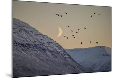 Moonlight over Snow Covered Mountain-Arctic-Images-Mounted Photographic Print
