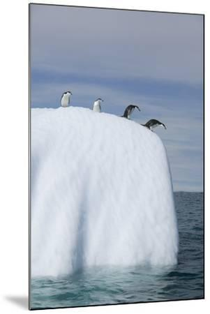 Penguins Peering over Iceberg-DLILLC-Mounted Photographic Print