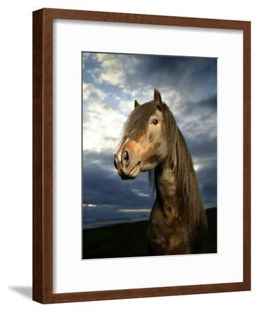 Portrait of Horse-Arctic-Images-Framed Photographic Print