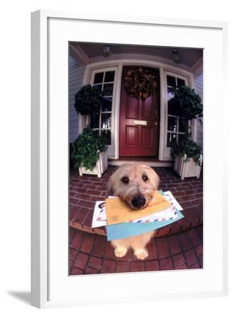 Dog Holding Mail-DLILLC-Framed Photographic Print