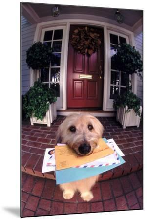 Dog Holding Mail-DLILLC-Mounted Photographic Print
