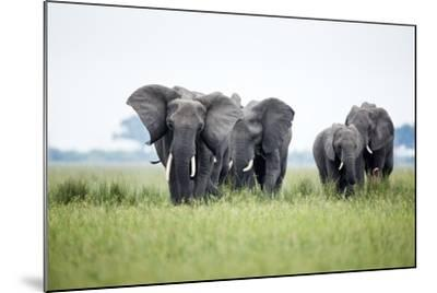 An Elephant Herd in Grassland-Richard Du Toit-Mounted Photographic Print