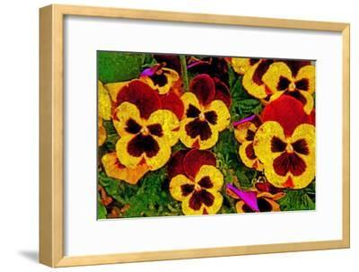 Pansies-Andr? Burian-Framed Photographic Print