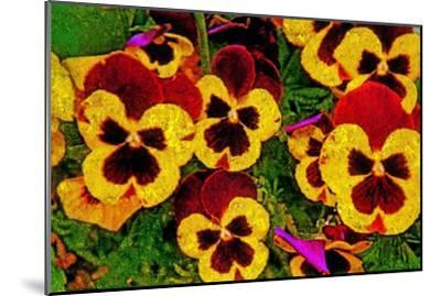 Pansies-Andr? Burian-Mounted Photographic Print