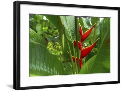 La Paz Waterfall Gardens.-Stefano Amantini-Framed Photographic Print