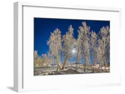 Snow Crystals on Trees in Winter, Lapland, Sweden-Arctic-Images-Framed Photographic Print