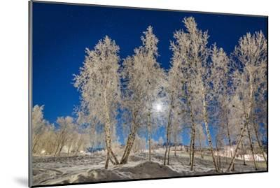 Snow Crystals on Trees in Winter, Lapland, Sweden-Arctic-Images-Mounted Photographic Print