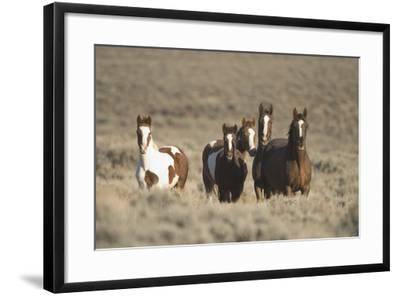 Herd of Wild Horses-DLILLC-Framed Photographic Print