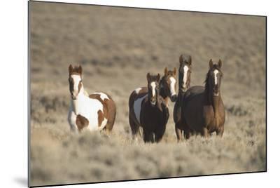 Herd of Wild Horses-DLILLC-Mounted Photographic Print