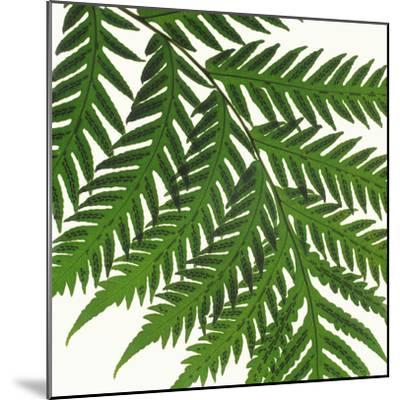 Sword Fern Frond-DLILLC-Mounted Photographic Print