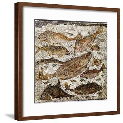 Roman Art : Fishes--Framed Photographic Print