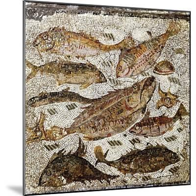 Roman Art : Fishes--Mounted Photographic Print
