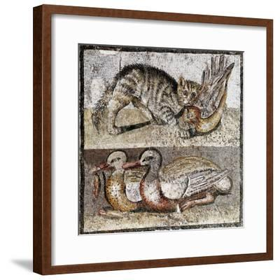 Roman Art : a Wild Cat Catching a Partridge and Two Ducks--Framed Photographic Print