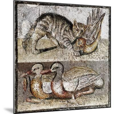 Roman Art : a Wild Cat Catching a Partridge and Two Ducks--Mounted Photographic Print