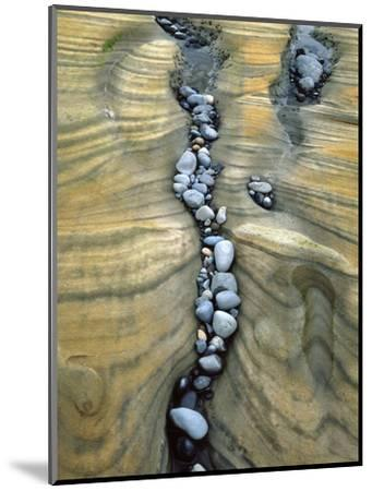 Rocks Caught in Sandstone Formations, Seal Rock Beach, Oregon, USA-Jaynes Gallery-Mounted Photographic Print