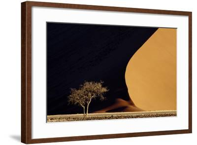 Namibia, Namib-Naukluft Park. Red Sand Dunes Contrast and Tree-Jaynes Gallery-Framed Photographic Print