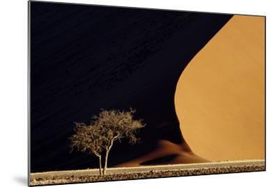 Namibia, Namib-Naukluft Park. Red Sand Dunes Contrast and Tree-Jaynes Gallery-Mounted Photographic Print