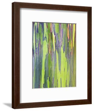 Rainbow Eucalyptus Trunk Near Hana, Maui, Hawaii, Usa-Rob Tilley-Framed Photographic Print