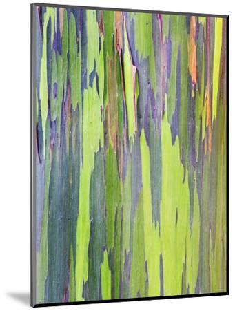 Rainbow Eucalyptus Trunk Near Hana, Maui, Hawaii, Usa-Rob Tilley-Mounted Photographic Print