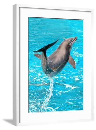Dolphin Plays In Pool-Michal Bednarek-Framed Photographic Print