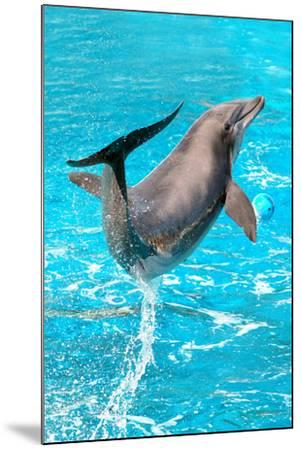 Dolphin Plays In Pool-Michal Bednarek-Mounted Photographic Print