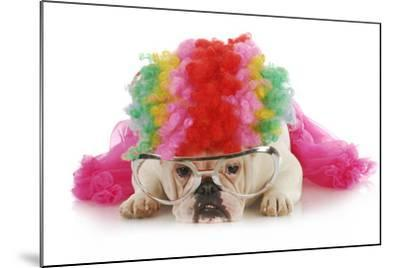 Silly Dog - English Bulldog Dressed Up Like A Clown On White Background-Willee Cole-Mounted Photographic Print