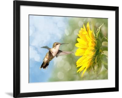 Dreamy Image Of A Hummingbird Next To A Sunflower-Sari ONeal-Framed Photographic Print
