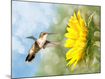 Dreamy Image Of A Hummingbird Next To A Sunflower-Sari ONeal-Mounted Photographic Print