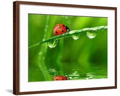 Fresh Morning Dew And Ladybird-volrab vaclav-Framed Photographic Print