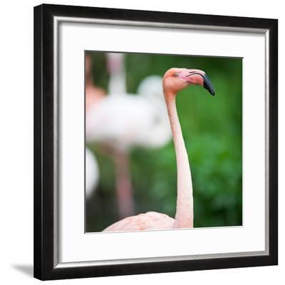 Pink Flamingos-l i g h t p o e t-Framed Photographic Print