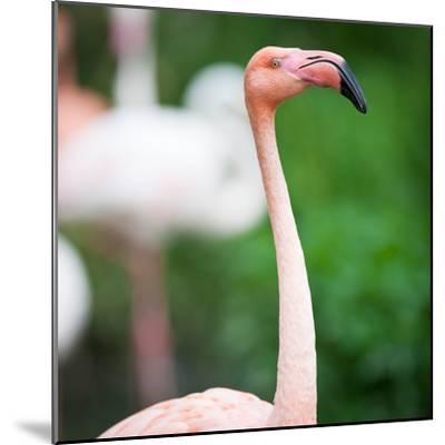 Pink Flamingos-l i g h t p o e t-Mounted Photographic Print