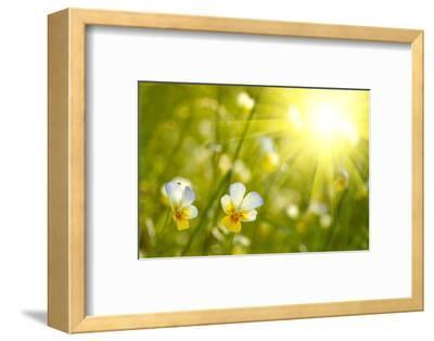 Spring Flowers Background-silver-john-Framed Photographic Print