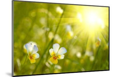 Spring Flowers Background-silver-john-Mounted Photographic Print