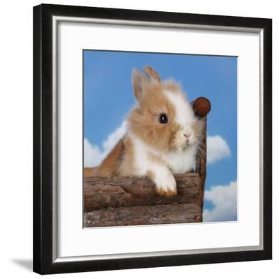 Rabbit Baby Bunny Outdoor-Richard Peterson-Framed Photographic Print