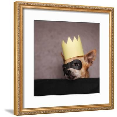 A Cute Chihuahua With A Crown And Mask On-graphicphoto-Framed Photographic Print
