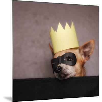 A Cute Chihuahua With A Crown And Mask On-graphicphoto-Mounted Photographic Print