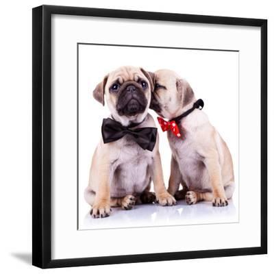 Lady Mops Puppy Whispering Something Or Kissing Its Gentleman Partner While Seated-Viorel Sima-Framed Photographic Print
