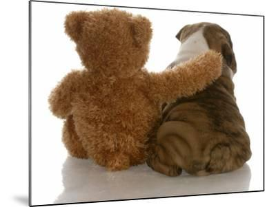 Best Friends - English Bulldog Puppy Sitting Beside Bear-Willee Cole-Mounted Photographic Print