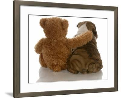 Best Friends - English Bulldog Puppy Sitting Beside Bear-Willee Cole-Framed Photographic Print