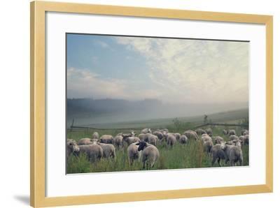 Herd Of Sheep On Beautiful Mountain Meadow-conrado-Framed Photographic Print