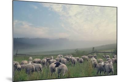 Herd Of Sheep On Beautiful Mountain Meadow-conrado-Mounted Photographic Print
