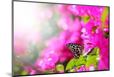 Majestic Morning Scene With Butterfly Feeding On Nectar Of A Bouganvillea Flower With Sunrays-smarnad-Mounted Photographic Print