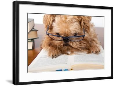 Serious Dog In Glasses-Okssi-Framed Photographic Print