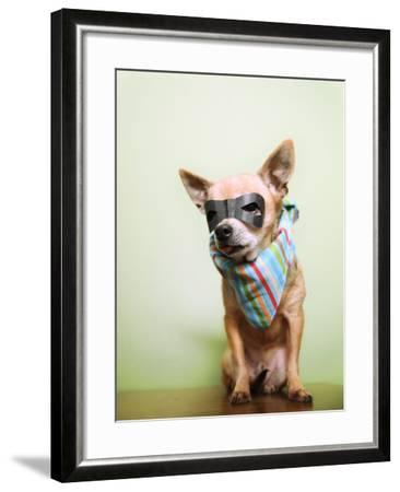 A Cute Chihuahua With A Mask And Bandana On-graphicphoto-Framed Photographic Print