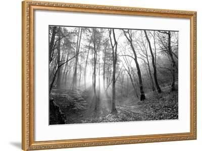 Autumn Forest With Fog And Lights-udvarhazi-Framed Photographic Print