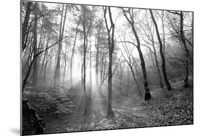 Autumn Forest With Fog And Lights-udvarhazi-Mounted Photographic Print